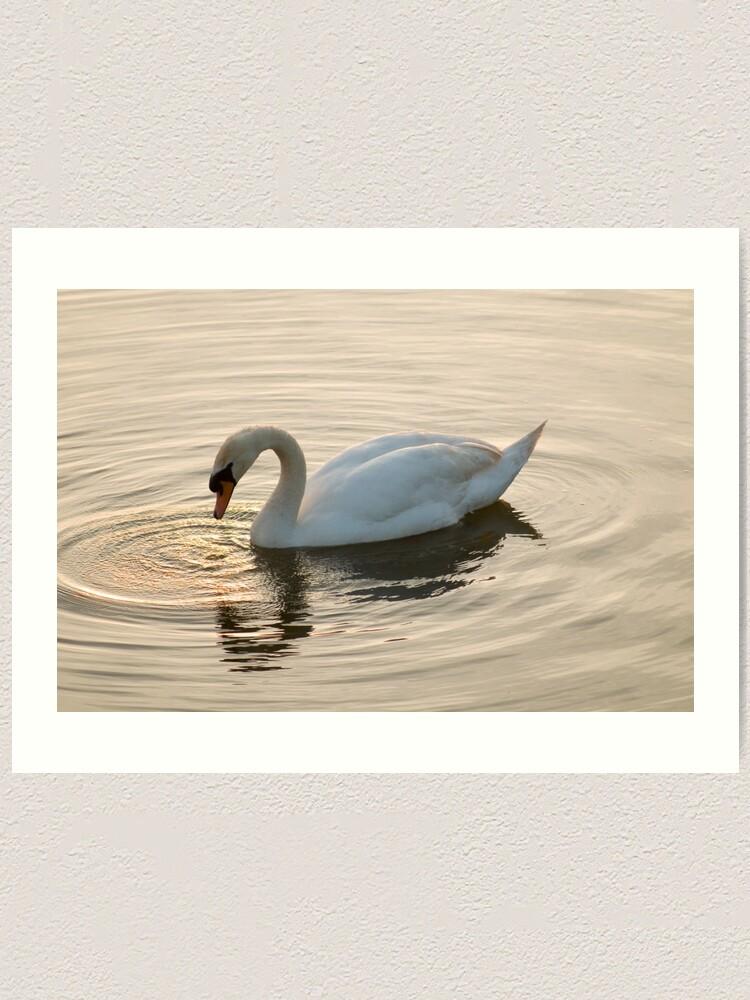 Alternate view of Swan Lake Art Print