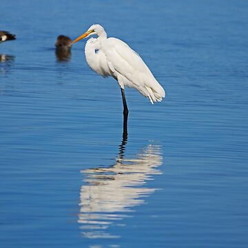 Great White Egret at Ding I by Michiale