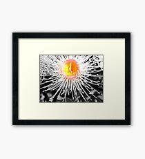 Tiny Gum Blossom - in Macro Framed Print