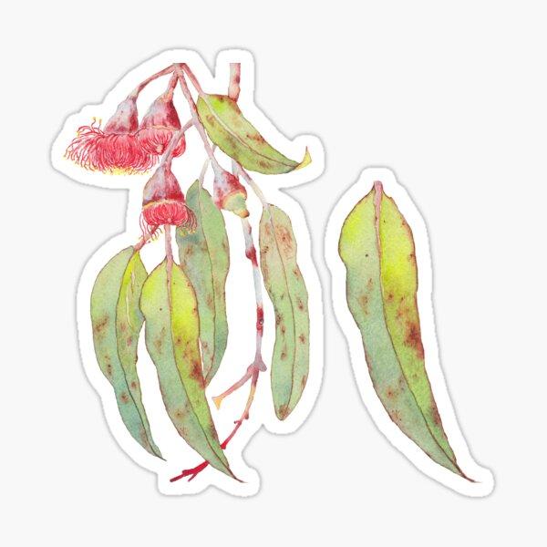 Flowering Silver Princess Eucalyptus Watercolor Sticker