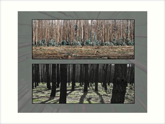 Bushfire devastation by Robert Dettman
