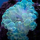 Bubble coral by Celeste Mookherjee