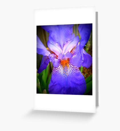 Purple face - Iris in neighbour's garden, Spring 2009 Greeting Card