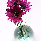 three purple daisies in spherical vase by OldaSimek