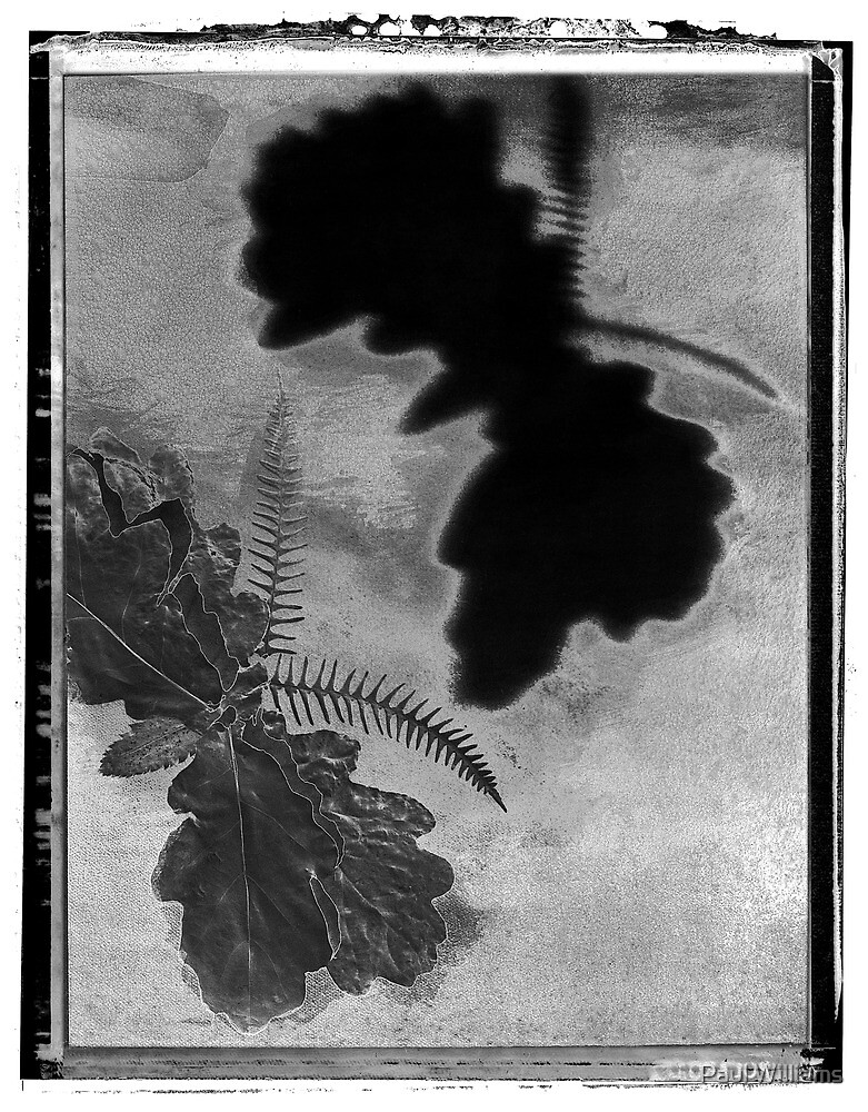 """Abstract Black and White Art Photo - """"The Moth"""" by Paul Williams"""