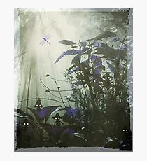 At the bottom of the garden. Photographic Print