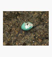 Robins Egg Photographic Print