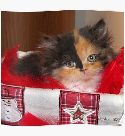 Seasons Greetings Christmas Calico Persian Kitten  Poster