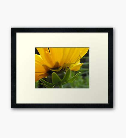I Am One With The Flower... Framed Print