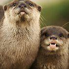 Otter`s Pride by Franco De Luca Calce