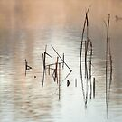 Lake Claremont reeds at dawn by nadine henley