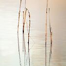 Lake Claremont reeds - closeup by nadine henley