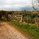 Schotterstraße bei Mevagissey, Cornwall, England von trish725