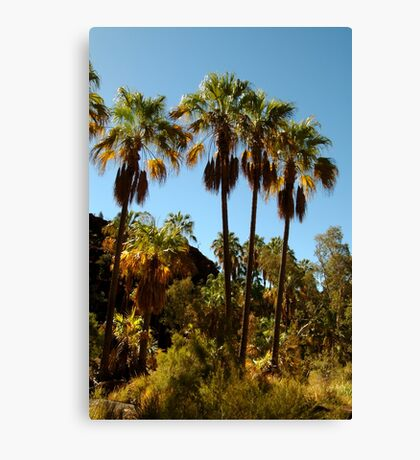 Rare Ancient Red Cabbage Palms,N.T. Canvas Print