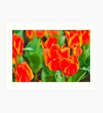 Fire tulips in garden Art Print