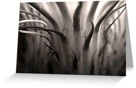 Cactus Bloom in Sepia by Ellen Cotton