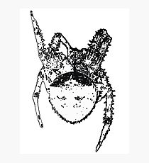 Cat Face Spider  Photographic Print