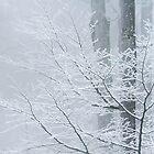 Aus dem Schwarzwald ist im Winter ein Weißwald geworden (The Black Forest becomes, in Winter, a White Forest) by metriognome