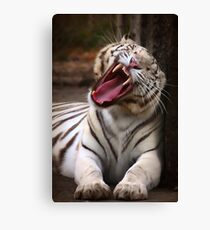 The Big Yawn Canvas Print