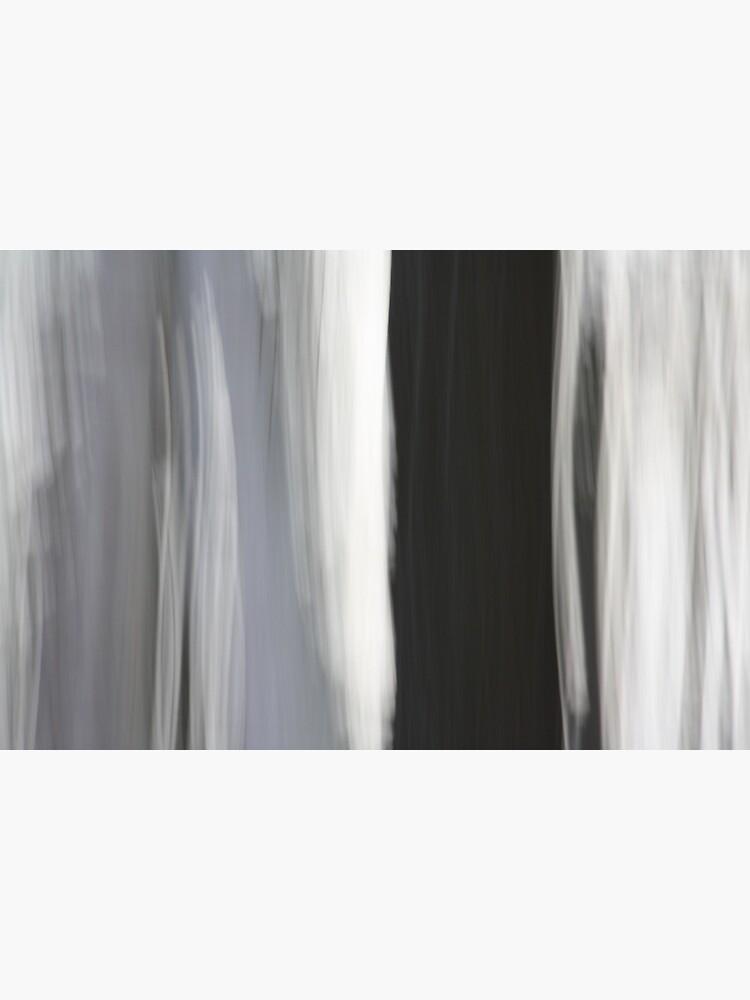 White & Black Trees by LynnWiles