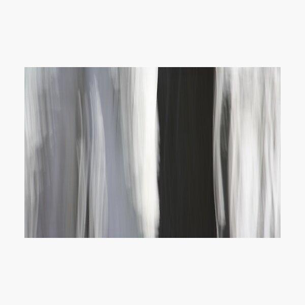 White & Black Trees Photographic Print