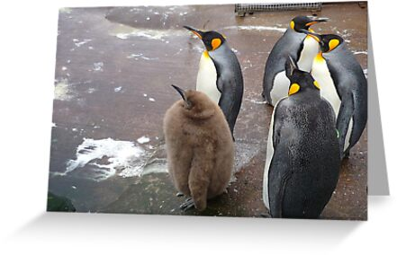 Edinburgh Zoo: baby penguin by Yonmei
