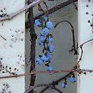 Blue by Cynthia Staples