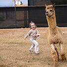 Chasing Llamas by Sue  Cullumber