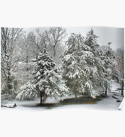 Snow Covered Cedars Poster