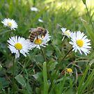 Die Schönheit liegt im Auge des Bienenhalters von CleverCharles