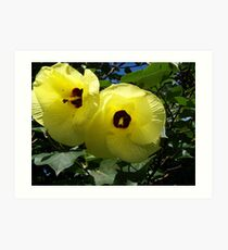 Native Hibiscus Art Print