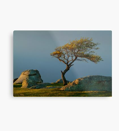 Dog Rocks, Batesford Victoria Metal Print
