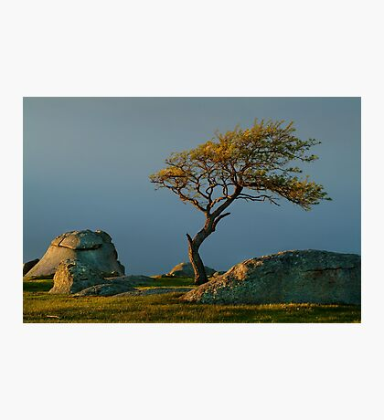 Dog Rocks, Batesford Victoria Photographic Print