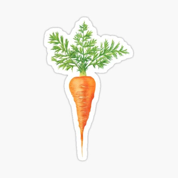 Succulent Fresh Carrot Sticker