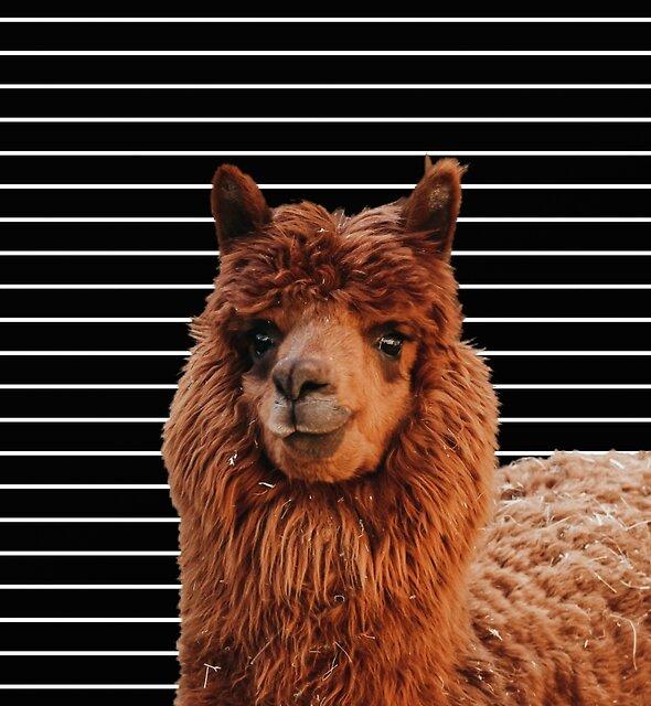 Llama Drama by Printpix