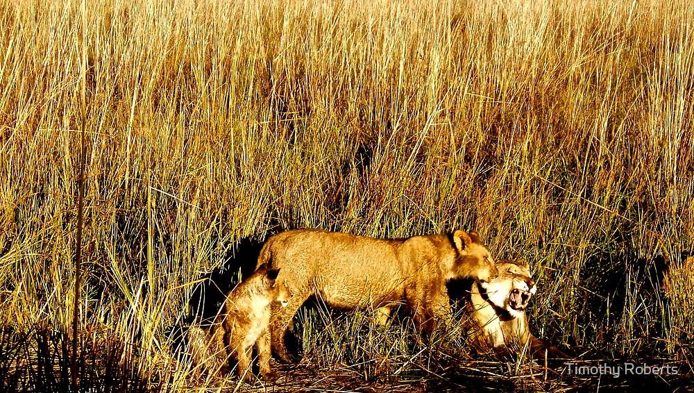 Morning Stir - Botswana by Timothy Roberts