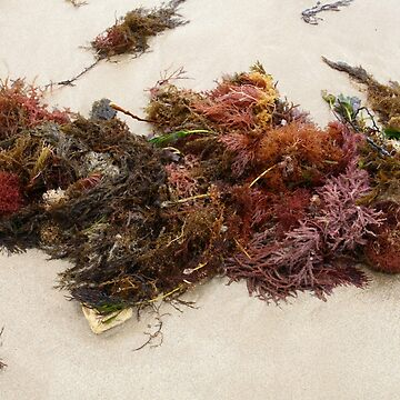 Seashore Ikebana 4 by beeden