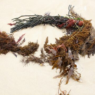 Seashore Ikebana 5 by beeden