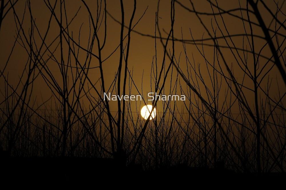 SUN SET by Naveen  Sharma
