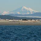 Mount Baker by Freedom