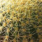 Cactus by JohnYo