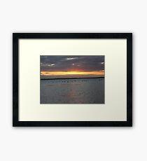 Black Swans on Lake Connewarre Framed Print