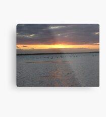 Black Swans on Lake Connewarre Metal Print