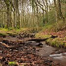 Stream Running through Holford Combe by kernuak