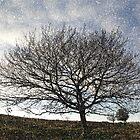 A Glorious Tree by Alexandra Lavizzari