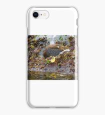 South American Yellow footed bird  iPhone Case/Skin