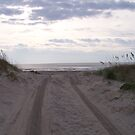 Beach Road by DianaTaylor/ JacksonDunes