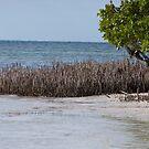 Anne's Beach, Islamorada by DianaTaylor/ JacksonDunes