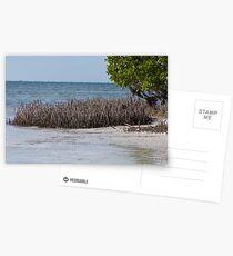 Anne's Beach, Islamorada Postcards