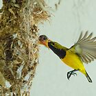 Feeding on the wing by AnnaKT